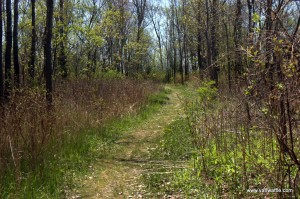 Owen Point Trail at Presqu'ile Provincial Park