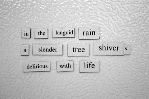 Rain Tree Haiku