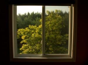 My office window