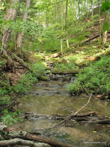 A trailside stream in Hockley Valley