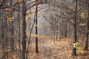 The Bruce Trail in Hockley Valley, October