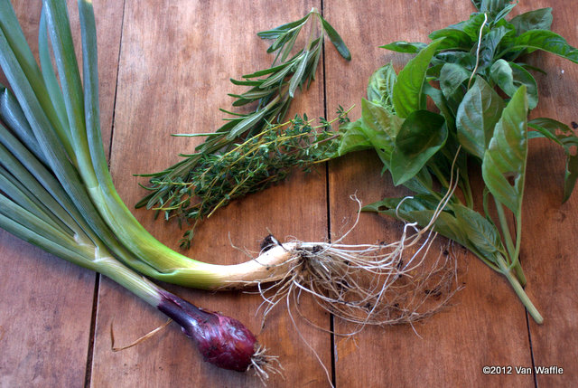 Onions and herbs from the garden