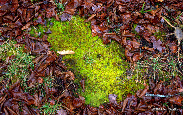 Moss and birch leaves