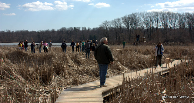 A small crowd watches the eagle nest in Cootes Paradise