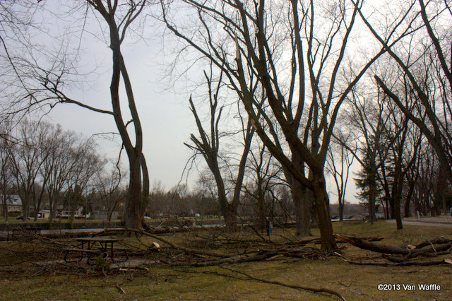 Ice storm damage in Guelph's Riverside Park