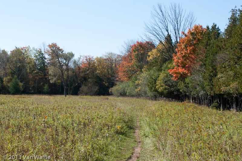 Hanlon Creek meadow