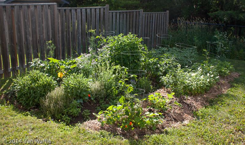Garden year 3