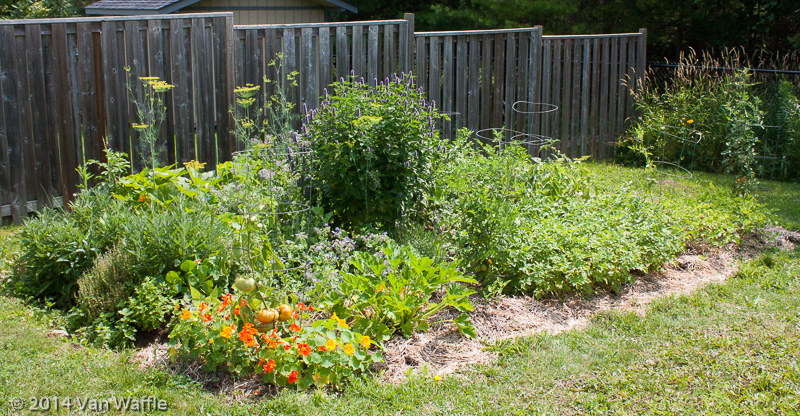 Vegetable garden in July