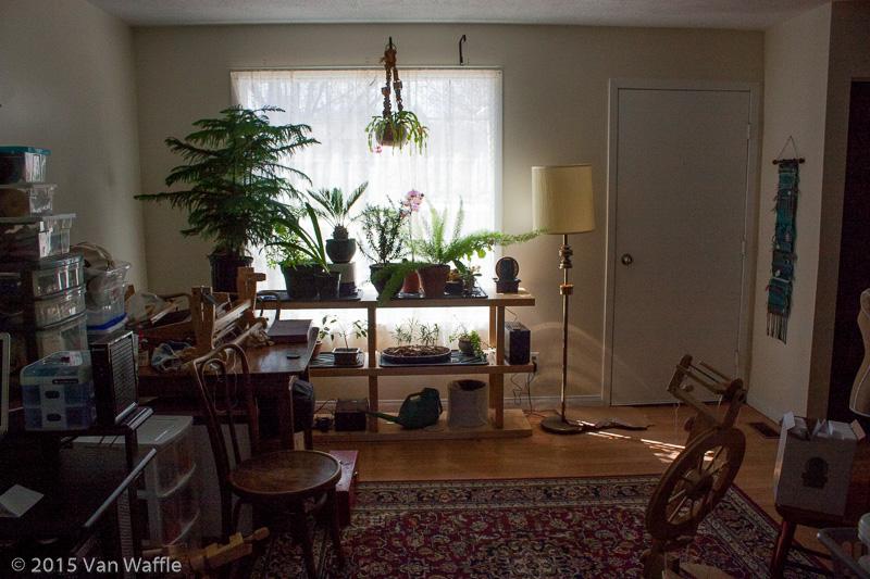 Houseplants in living room window