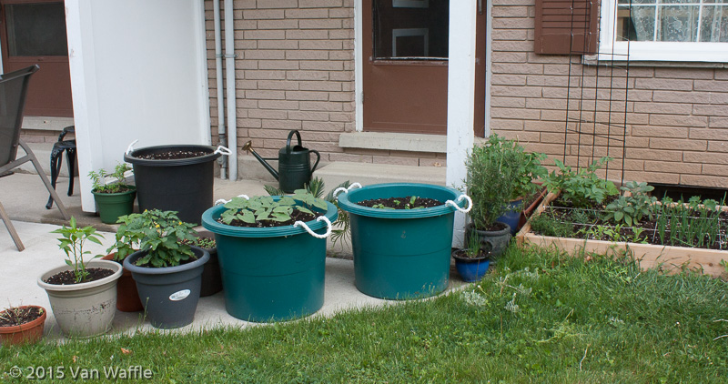 Barrels and raised bed