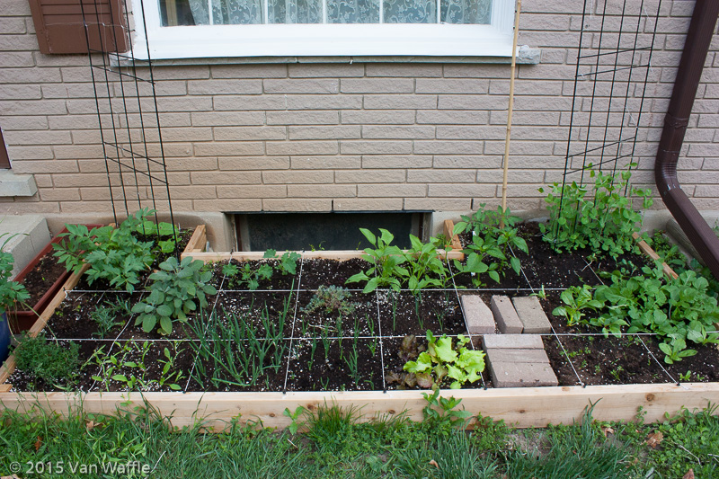 Raised bed fully planted