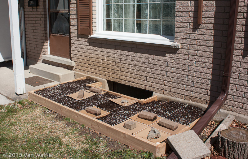 Square foot garden 1