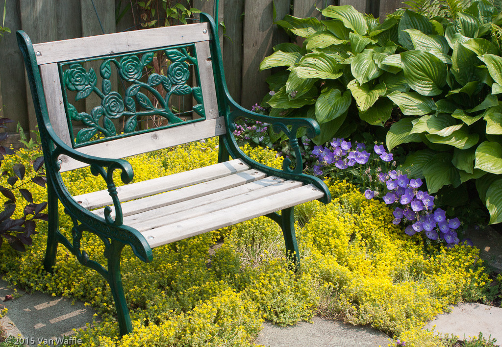 A quiet bench in a sunny corner.