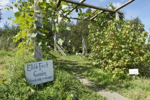 Edible Forest Garden, by Richard Patterson